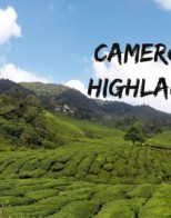 We Made it to the Cameron Highlands